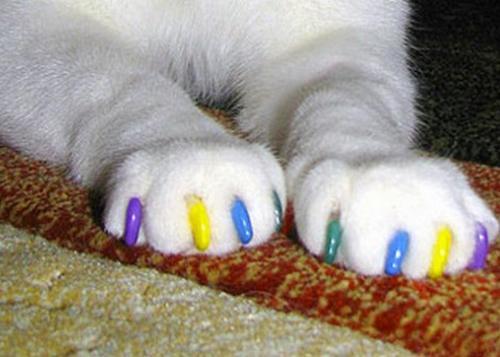 котята в антицарапках фото